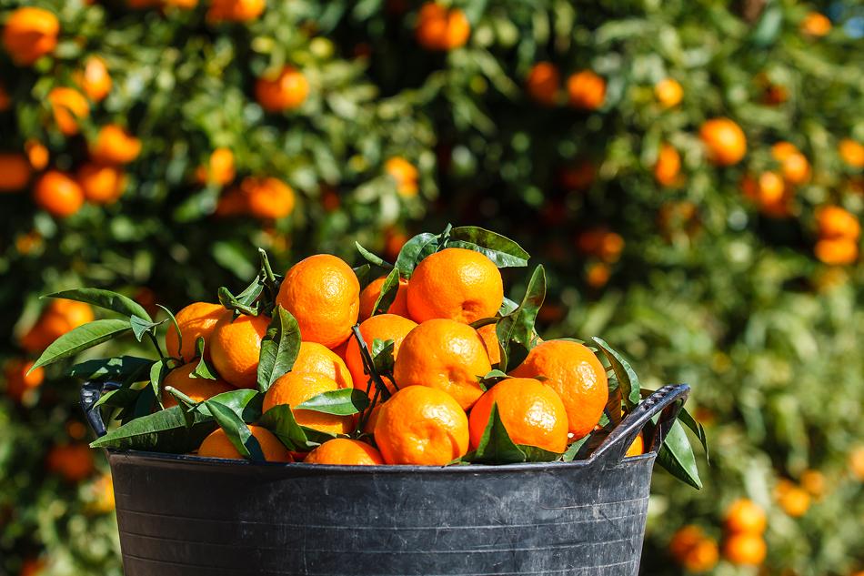 nueva web enrique romay naranjas